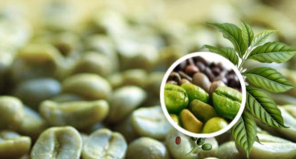 Manfaat Green Coffee Bean buat Tubuh